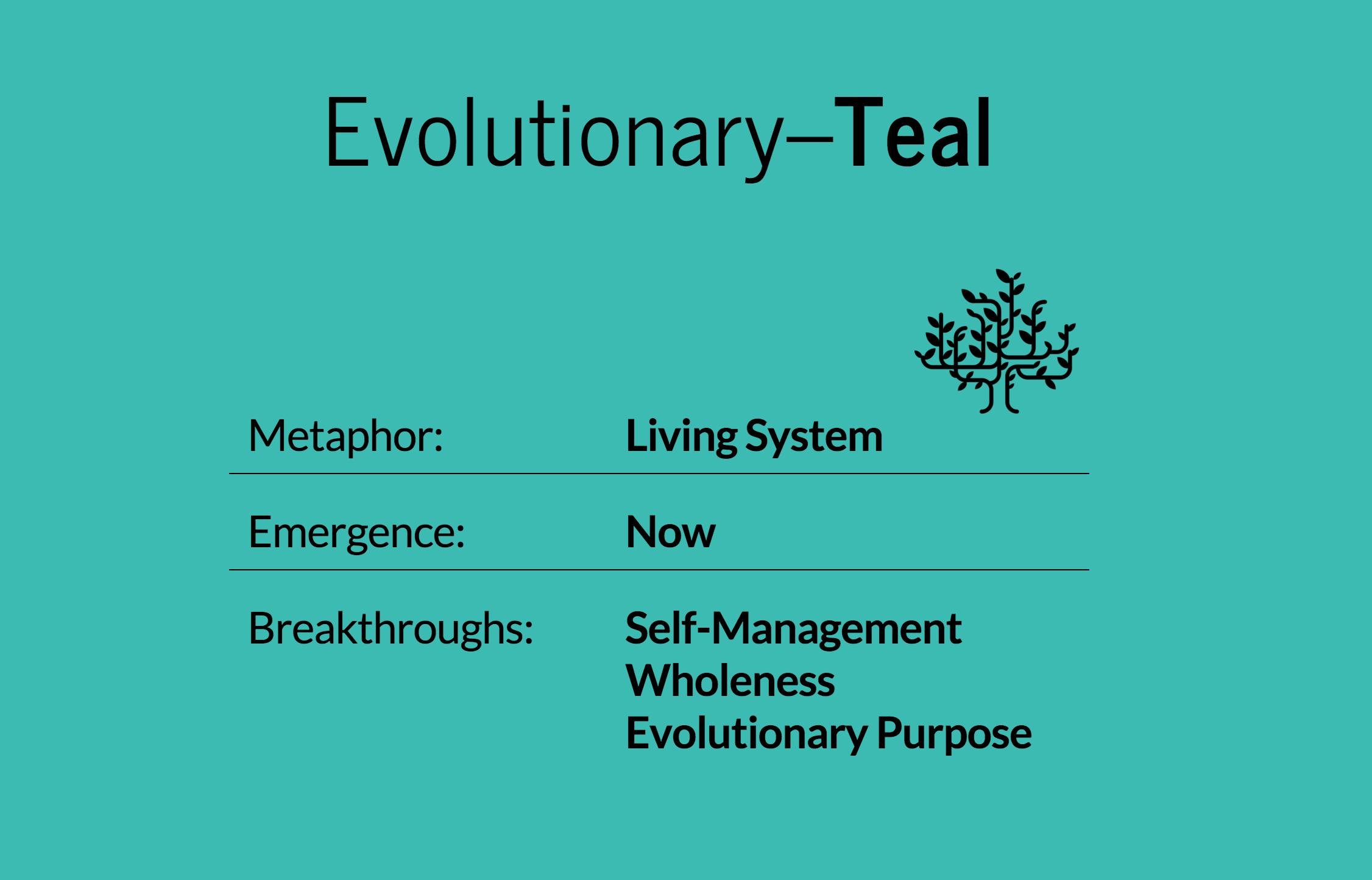 Teal company characteristics